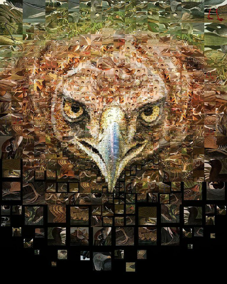 Audubon Climate Issue Mosaic