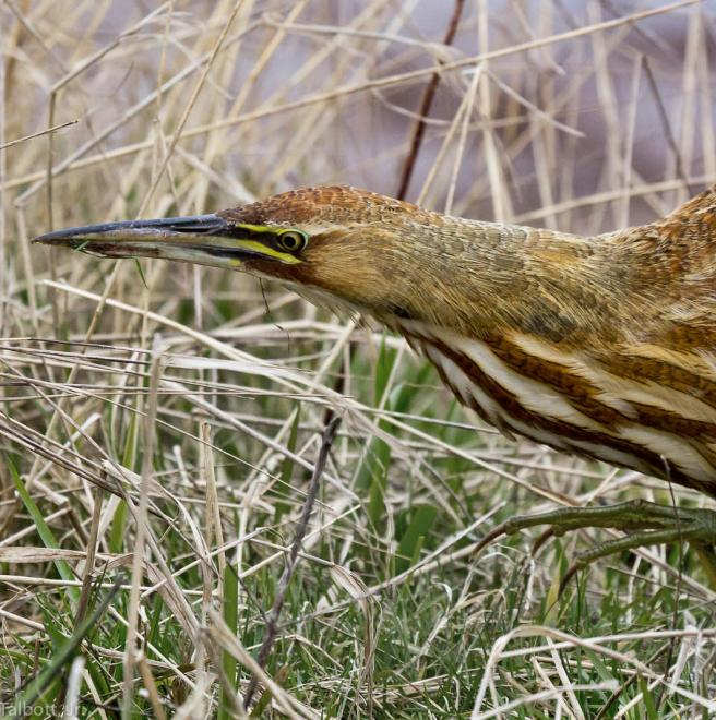 Audubon Birds & Climate Change Report - News - NC Birding Trail
