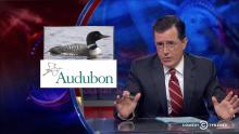 Colbert Report Audubon report
